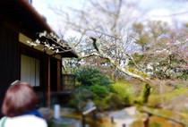 20160304KYOTO12.JPG