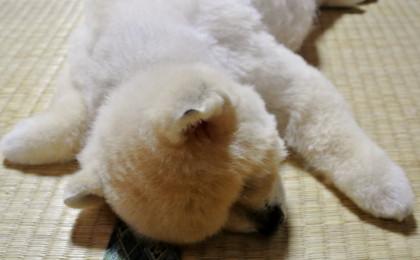 20120624momo4.JPG